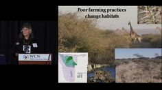 Dr. Laurie Marker, Cheetah Conservation Fund - WCN 2012 by Wildlife Conservation Network