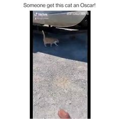 Cute Funny Animals, Cute Baby Animals, Cute Cats, Funny Cats, Cats And Cucumbers Video, Cats Scared Of Cucumbers, Really Funny Memes, Stupid Memes, Kitty Cats