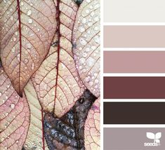 { color dew } image via: @clangart #colorscheme #colorpallette
