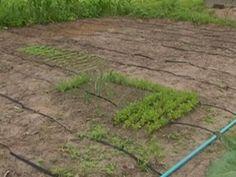ÁGUA: 'Bioágua' -água é reciclada por agricultores, para...