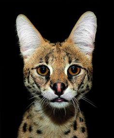 Een prachtige fotoserie van nachtdieren in de spotlights.