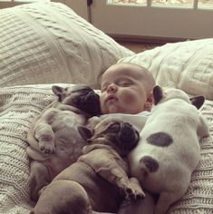 French bulldogs puppies keeping a baby warm | Feel Desain