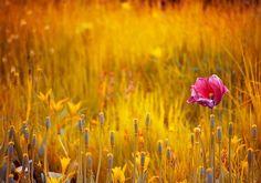 Фото, автор Hleod на Яндекс.Фотках