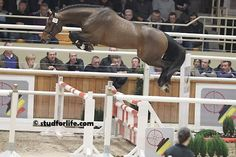 12 Jumpers Who Are Doing Just Fine On Their Own | HORSE NATION