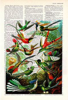Winter Sale 10% off Hummingbirds Print on Vintage by PRRINT