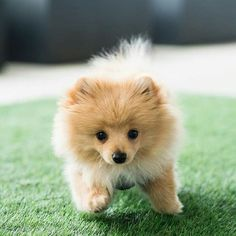 Things that make you go AWW! Like puppies, bunnies, babies, and so on. Cute Dogs And Puppies, I Love Dogs, Pet Dogs, Dog Cat, Doggies, Fluffy Animals, Cute Baby Animals, Animals And Pets, My Animal