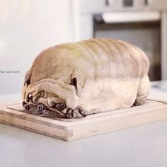 Cute? #cute #dog #bread #food #customdesign