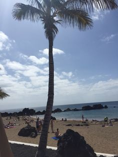 Palm trees in Lanzarote