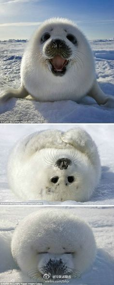 OMG! It's so wrong to want a wild animal, but WANT!!!