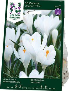 HLNG23705_1 Nelson Garden, Arcade, Plants, Flora, Plant