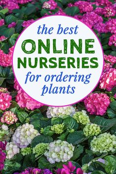 When you can't go shopping for outdoor plants in person, try having them delivered from one of these online nurseries. Whether you are looking for perennials, bushes or trees, you can find what you want from mail order nurseries. #fromhousetohome #plants #gardening
