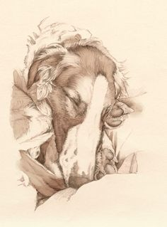 'Dova Sleeping' - Graphite Pencil drawing, scanned and coloured in Art Rage. By Robyn Rinehart