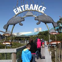 Go say hello to the manatees and the Manatee Viewing Center by the Tampa Electric Power Plant viewing station.  The warm waters from the plant draw the manatees in for some spa treatment.