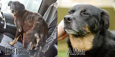 When Sunny was rescued he was emaciated; starved and malnourished. He has since made a wonderful recovery, and is looking for a loving home of his own.
