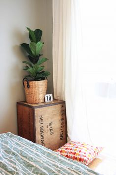 Reader Query: Where to Find Fiddle Leaf Figs in Perth | House Nerd