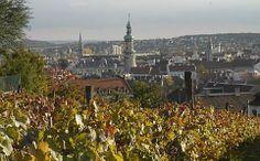 "Sopron: ""The capital of the Kékfrankos grape variety"". Wine Making, Wine Country, Hungary, Grape Vines, Be Perfect, Paris Skyline, Travel, Viajes, Vineyard Vines"