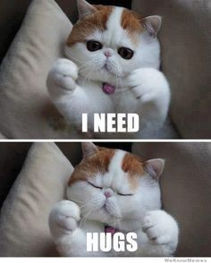 This is too funny!!! #cats #love #fluffy