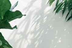 Imac Wallpaper, Macbook Air Wallpaper, Space Phone Wallpaper, Cute Desktop Wallpaper, Plant Wallpaper, Aesthetic Desktop Wallpaper, Green Wallpaper, Wallpaper Backgrounds, Wallpaper Dekstop