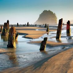 "Did you know Oregon has a ghost forest?Oregon Coast's ghost forest: Low tide on Neskowin Beach reveals stumps from a forest--""tree trunks jutting out of the sand, like apparitions of the forest that used to stand there. Oregon Vacation, Oregon Road Trip, Oregon Travel, Travel Usa, Oregon Coast Roadtrip, Oregon Beaches, Neskowin Beach, Neskowin Oregon, Places To Travel"
