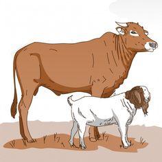 Goat Cartoon, Goat Logo, Aesthetic Desktop Wallpaper, Vector Photo, Displaying Collections, Cow, Moose Art, Lion Sculpture, Statue