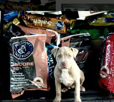 Annamaet Petfoods was founded to give the best nutrition and food to your #pets: learn why a veterinarian wanted to start a #sustainable pet food company, and how your fur baby can benefit from switching to more sustainable pet foods.