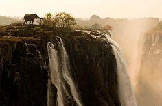 bull elephant at victoria falls, zambia. credit: marsel van oosten