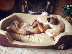 Nunca he visto a un perro mas relajado que este:3!