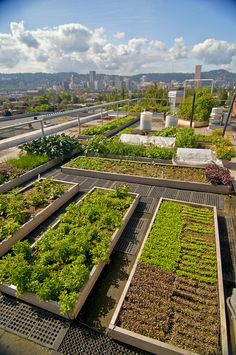 Image Result For Roof Garden