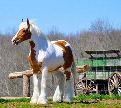 Wind of heaven blows between horses ears... (Beautiful!!)
