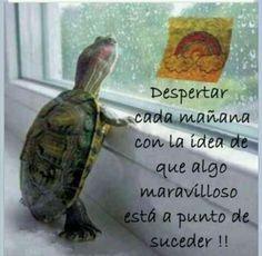 Buenos dias!! ¿Y cómo lo ves hoy? Lleno de lluvia..... Cuida a la mascota please....