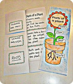 Parts of a plant foldable $1.00  English & Spanish