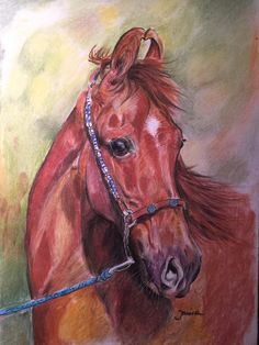 Roshni the Marwari mare Pastel 25x42 cm For sale