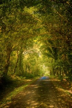 Rural road in the forests of the Basque Country.