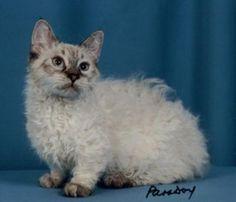 Skookum cat. What a beauty.
