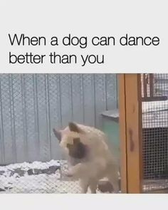 It's Saturday 🥳 Do you know someone who dances badly 😂 Tag him and say nothing 😎. Credits unknown via . Cute Baby Dogs, Cute Funny Dogs, Cute Dogs And Puppies, Cute Funny Animals, Cute Baby Animals, Funny Cats And Dogs, Big Dogs, Doggies, Funny Dog Videos