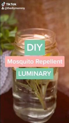 Best Mosquito Repellent, Mosquito Spray, Mosquito Repelling Plants, Insect Repellent, Mosquito Repellent Candles, Keeping Mosquitos Away, Citronella Candles, Dollar Stores, Helpful Hints