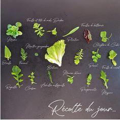 Et oui. Nous sommes le 31 janvier et me voilà à récolter quelques feuilles de salades pour accompagner des navets lacto-fermentés (spécialité alsacienne). Faites le plein de recettes gourmandes #sansgluten #sanslactose et du #potager sur mon blog Ma Cuisine a du sens ;) Sans Gluten Sans Lactose, Oui, Blog, Gluten Free Cooking, Cooking Recipes, Leaves, Salads, Backyard Farming, Blogging