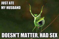 praying mantis, had sex