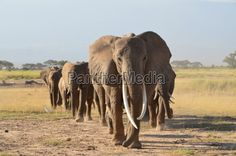 Safari I Africa I Wild Animals I Nature I