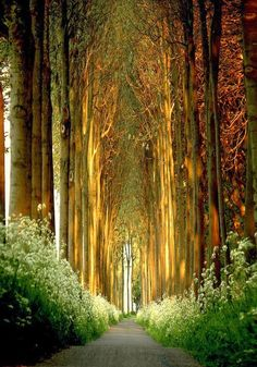Church of Trees in Belgium Can I get married here please??