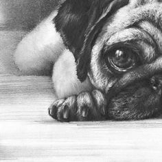 Realistic Animal Drawings, Cute Animal Drawings, Drawings Of Dogs, Dog Pencil Drawing, Dog Steps, Baby Pugs, Pug Art, Dog Poster, Pug Love