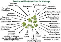 Moringa the miracle tree. Shop moringa-based nutrition and… Moringa Oleifera Benefits, Moringa Uses, Benefits Of Moringa Leaves, Fruit Benefits, Tea Benefits, Miracle Tree, Bebidas Detox, Tomato Nutrition, Clean Eating Meals