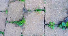 Herbicidas caseros