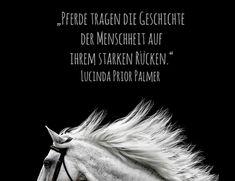 Die 373 Besten Bilder Zu Pferdesprüche Deutsch