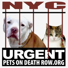 """Very thorough but troubling information about the NYC Animal """"Care"""" Center (ACC) from Urgent Pets on Death Row.Org.  And check out their website for their daily list of animals on the NYC ACC nightly kill list."""