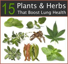 15 Plants And Herbs That Boost Lung Health  http://improvedaging.com/15-plants-herbs-that-boost-lung-health/