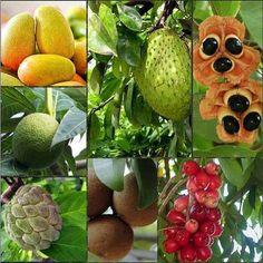 Fruit trees of Jamaica. Fruit And Veg, Fruits And Veggies, Fresh Fruit, Vegetables, Ital Food, Food Food, Jamaica Food, Jamaica Jamaica, Jamaica Travel