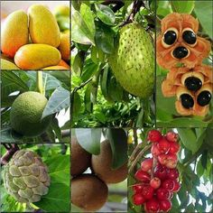 Jamaica Exotic fruits