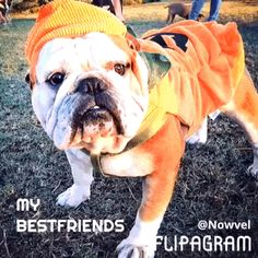 In today's #featured #Nowvel #photobook, fun photos of #furry #BestFriends courtesy of Holly Tanner Strauss! Print YOUR own FREE photo book like this album by Holly Tanner Strauss!