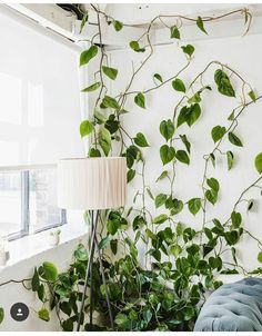 beautiful hanging plants ideas for home for House Plants Decor, Plant Decor, Plant Design, Garden Design, Interior Design Living Room, Living Room Decor, Belle Plante, Bohemian Bedroom Decor, Best Indoor Plants